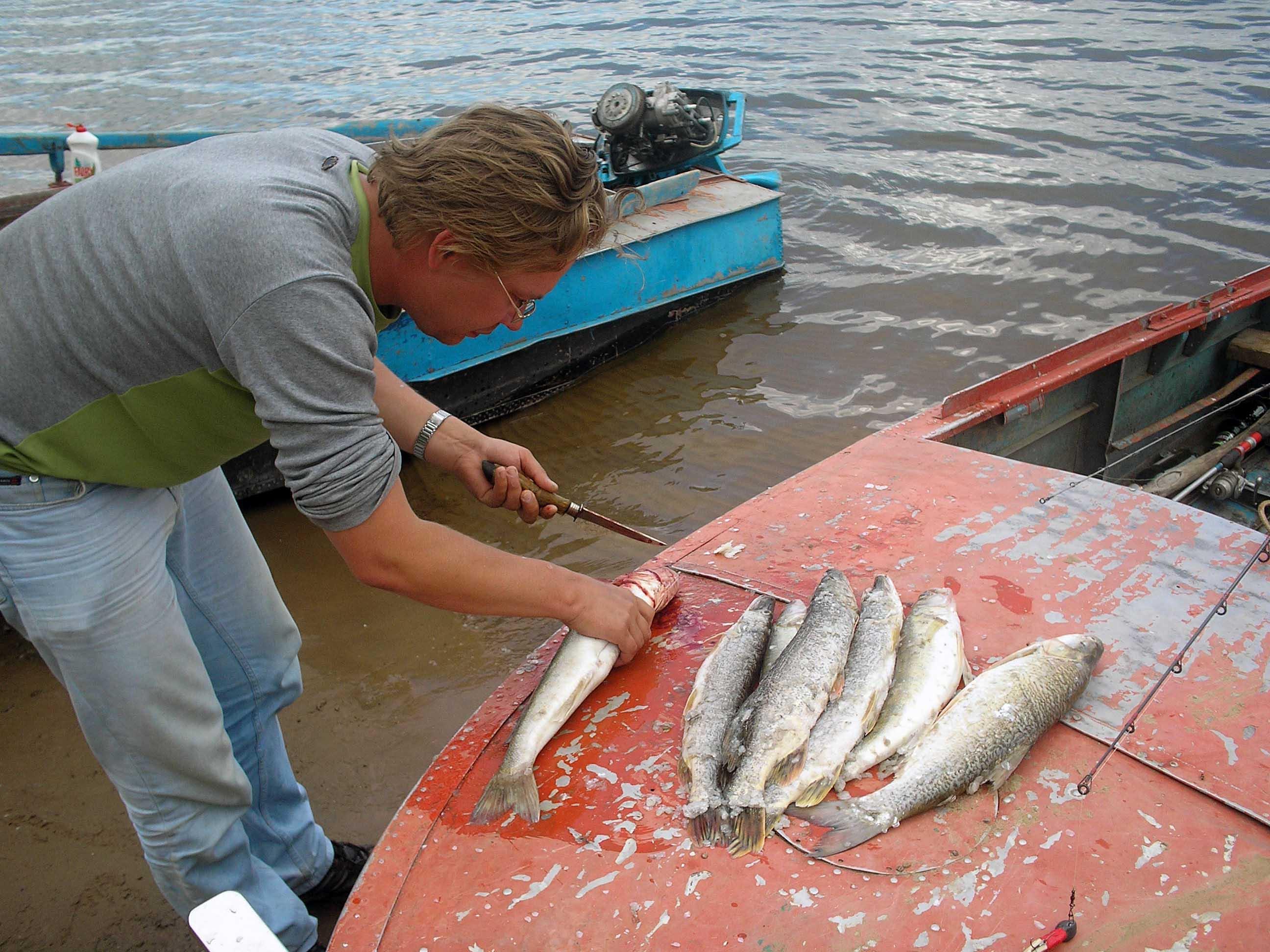 сколько варить икру для рыбалки